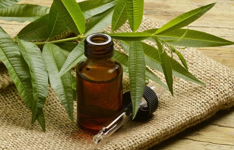 Эфирное масло чайного дерева - свойства и применение