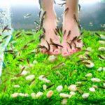 ВИЧ-инфекция при педикюре рыбками