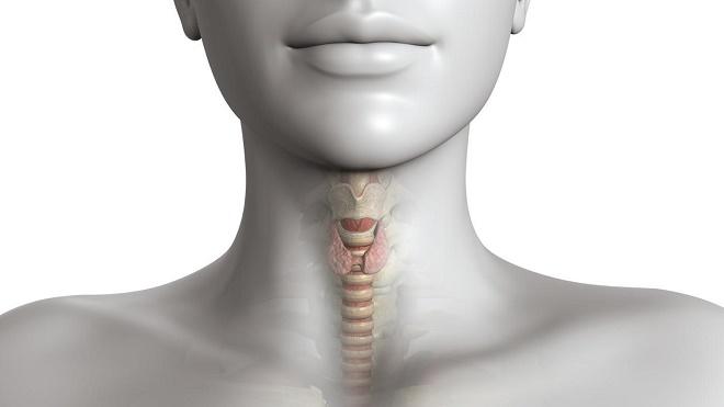 Щитовидка делится на два отдела